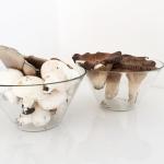 Un mazzo di funghi per me