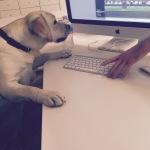 Non togliermi la tastiera papà! Il mondo deve sapere!