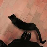Mi si avvicinano gatti in tinta. Romeo!